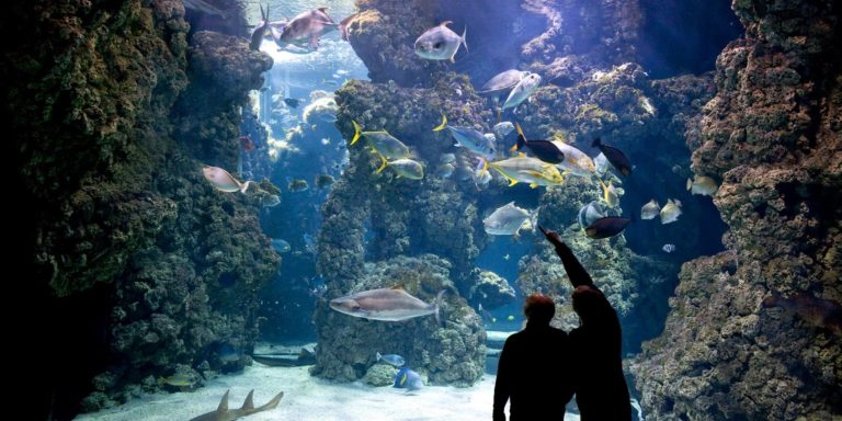 oceanographic museum to reopen after 11 weeks of closure