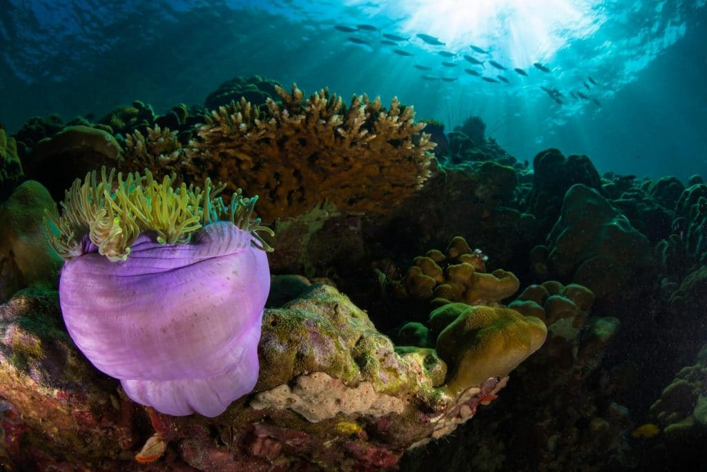 Credit Suisse creates fund for ocean protection