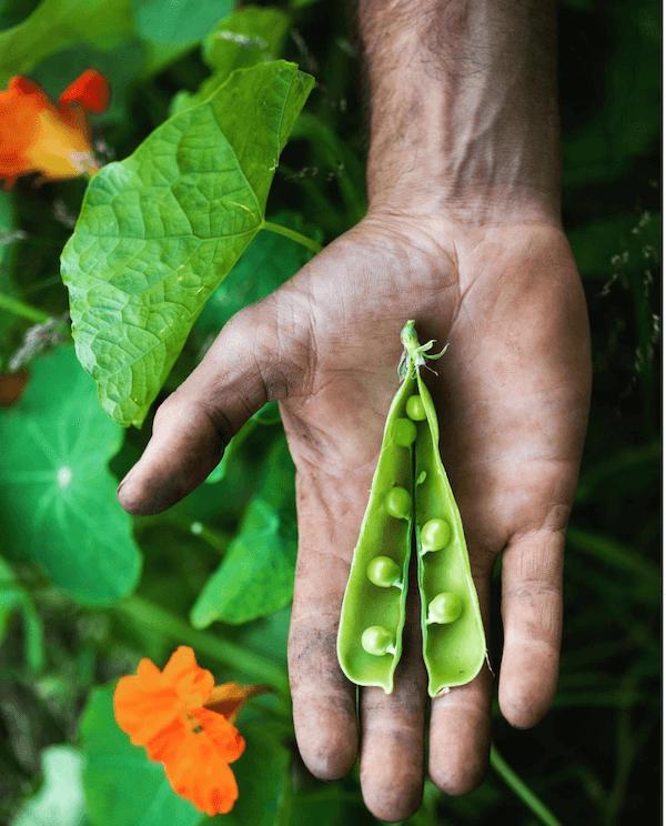mauro-colagreco-vegetable-garden