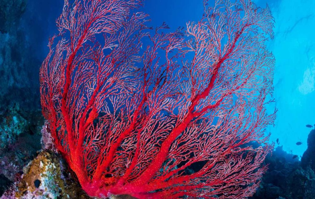 corail0-rouge