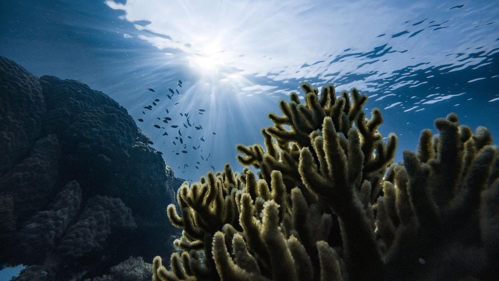 Coral reefs under threat