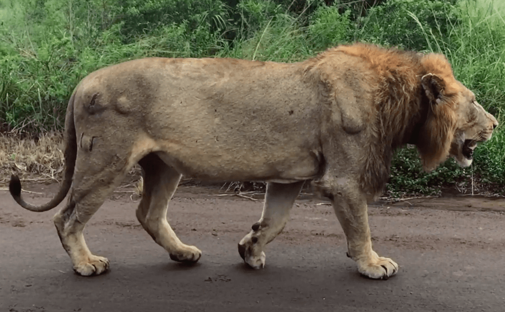 Shocking truth about lion hunting to be revealed at Monte-Carlo Film Festival